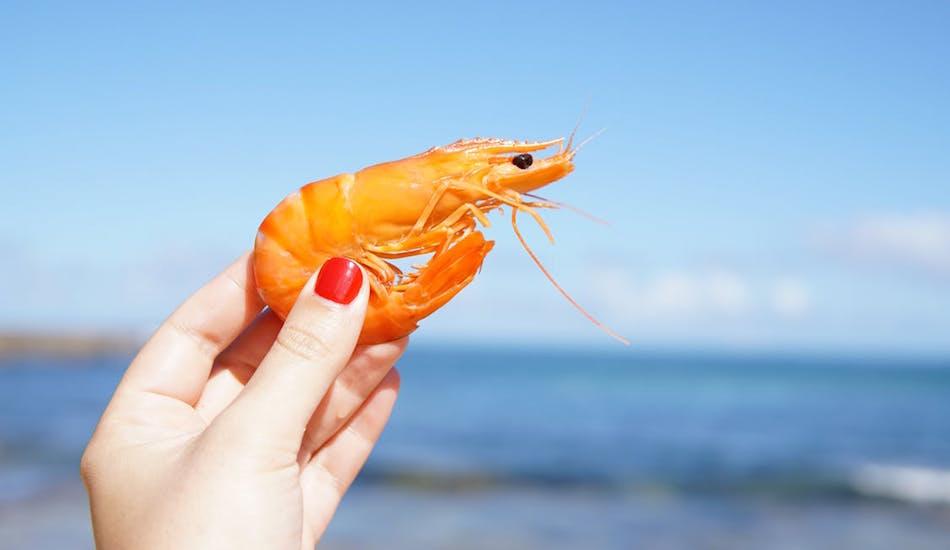 Des crevettes droguées à la cocaïne et à la kétamine découvertes en Angleterre
